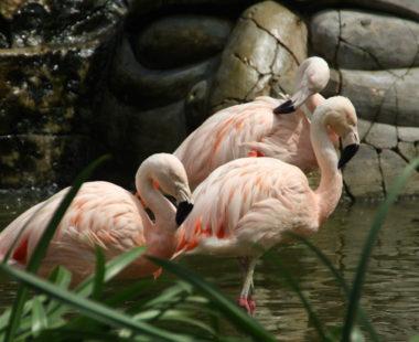 Maharani Zoo