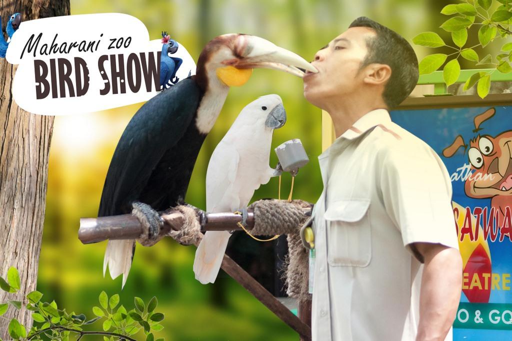 bird show ff