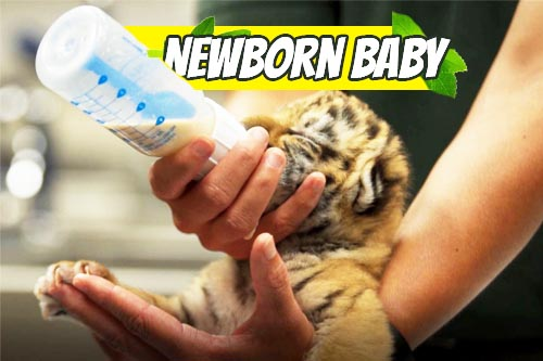 new born Baby